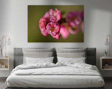 Blühende Prunus mit einem hängenden Tropfen von Jeffry Clemens