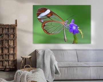 Glasvleugel vlinder von Rene Mensen
