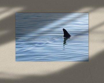 It is not a shark von Tina Hartung
