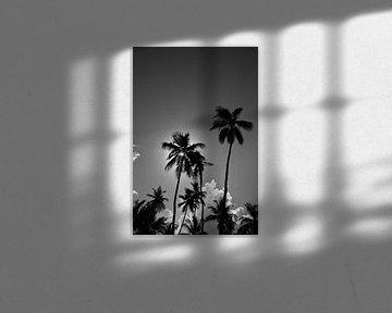 Palm van LUNA Fotografie