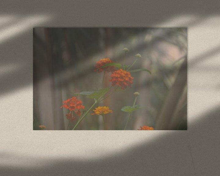 Beispiel: oranje bloen in een nevelige omgeving von Pascal Engelbarts