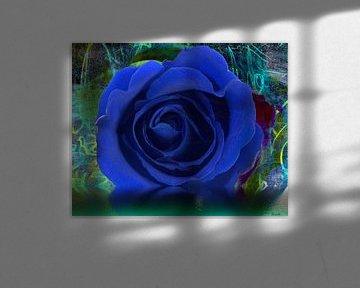 Blaue Rose von Gertrud Scheffler