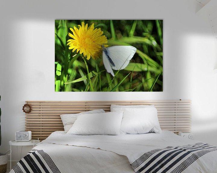 Impression: Pieris rapae butterfly sur michael meijer