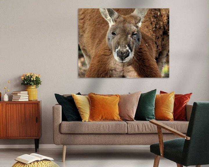 Beispiel: red kangaroo von michael meijer