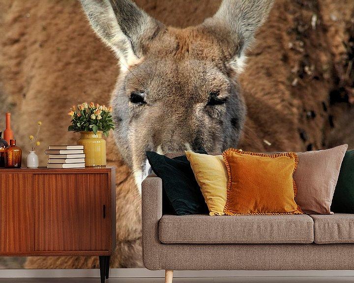 Beispiel fototapete: red kangaroo von michael meijer