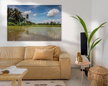 Rijstveld op Bali van Ilya Korzelius