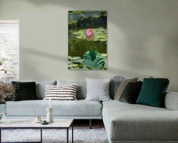 heilige Lotus von Jeffry Clemens