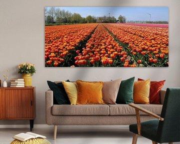 Tulpenvelden in de Noordoostpolder van Arline Photography