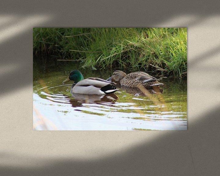 Beispiel: Two wild ducks von michael meijer