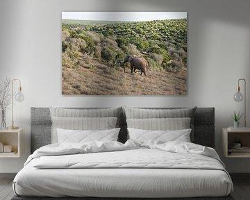 Afrikaanse olifant in Addo Elephant Park van Ron Poot