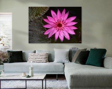 Rosafarbene Lotosblume in Wasser von Marcel van Balken