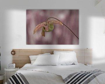 Roze vleesetende plant