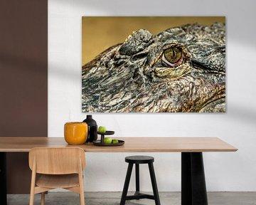 Mississippi Alligator von Rob Smit