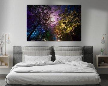 Evening Colors in the Trees van Brian Morgan