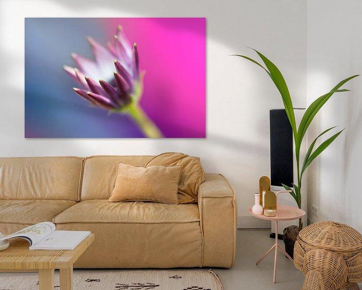 Sfeerimpressie: Spaanse margriet (Osteospermum ecklonis) van Tamara Witjes