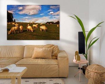 Cows on a hill van Kees Maas