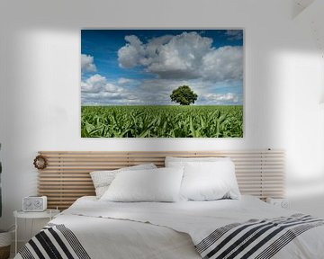 Solitaire eik in een maïsveld van Fotografiecor .nl