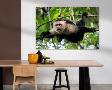 Makaak in Corcovado NP, Costa Rica van Martijn Smeets