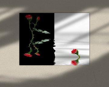 Rote Rosen von Martina Fornal