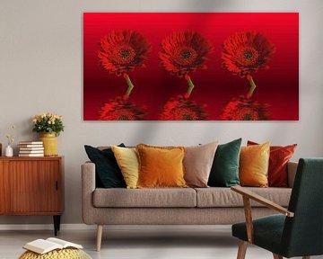 Rote Gerbera von Martina Fornal