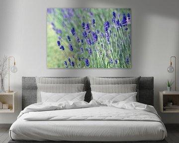 Zarter Lavendel von Martina Fornal