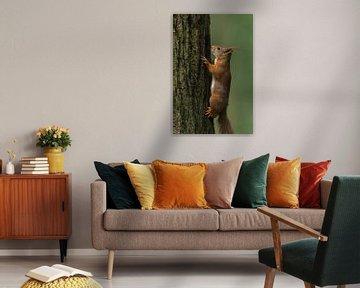 Rode eekhoorn op boom van Richard Guijt Photography