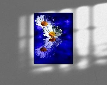 Spiegelung der Blüten von Martina Fornal