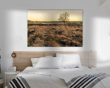 Heide in het ochtendlicht sur Tony Buijse