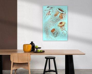 Ernst Haeckel, kwal, jellyfish. Discomedusae, Schweibenquallen