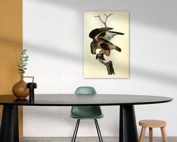Rough-legged Buzzard., Audubon, John James, 1785-1851, Buizerd