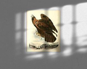 Adelaar, Golden Eagle., Audubon, John James, 1785-1851