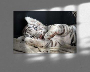 Weißer Baby Tiger von gea strucks