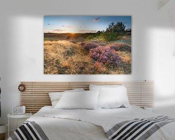 Zonsondergang boven paarse heide in de duinen van Fotografie Egmond