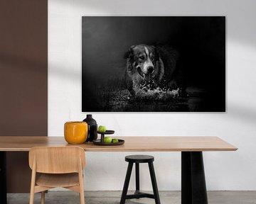 Hond in water en mist van Studio Nooks