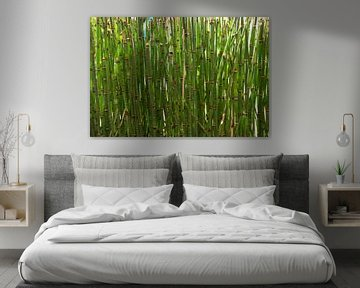 Bambus von Carolina Vergoossen