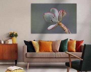 Vetplant groen met roze van Simone Meijer