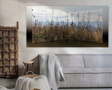 Prärie - Grasland von Christine Nöhmeier