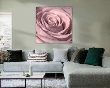 Rose von Jessica Berendsen