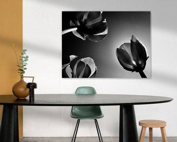 Hollandse tulpen in zwartwit