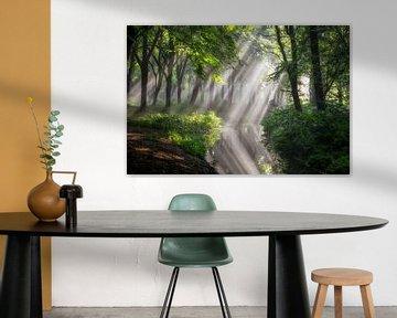 Reflektiertes Licht von Lars van de Goor