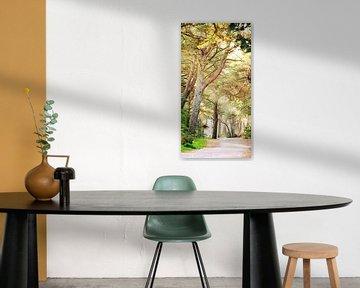 forest track van Jana Behr