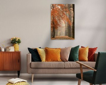 forest track in autumn van Jana Behr