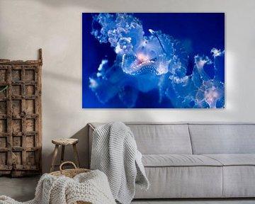 Jellyfish von Sander Wiessner