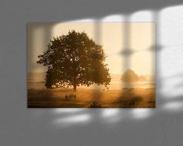 Sonnenaufgang mit Nebel von Piet Haaksma