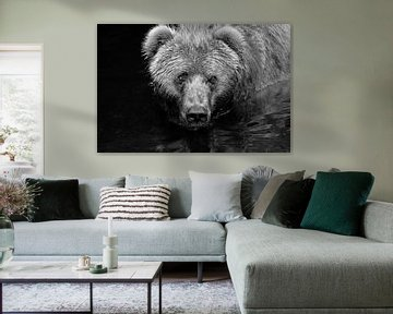 Curious Bear von Jasper van de Gein Photography
