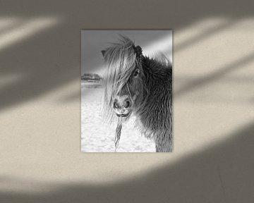 Shetland Pony in Winterlandschap von Jasper van de Gein Photography