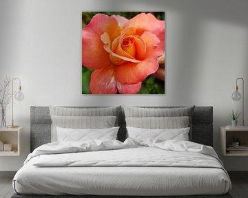 Prachtige roos van Brigitte Hofman-Balfoort