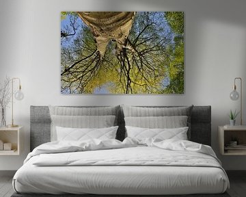 Beech Tree *Fagus sylvatic* van wunderbare Erde