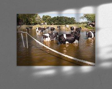 Koeien in het water van Irene Kuizenga
