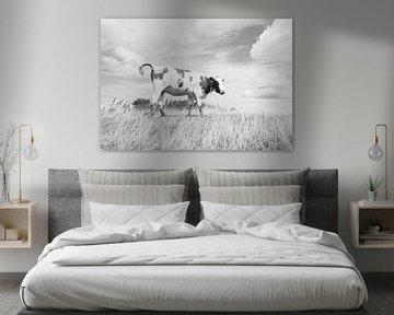 Weiden Kuh von Melvin Fotografie
